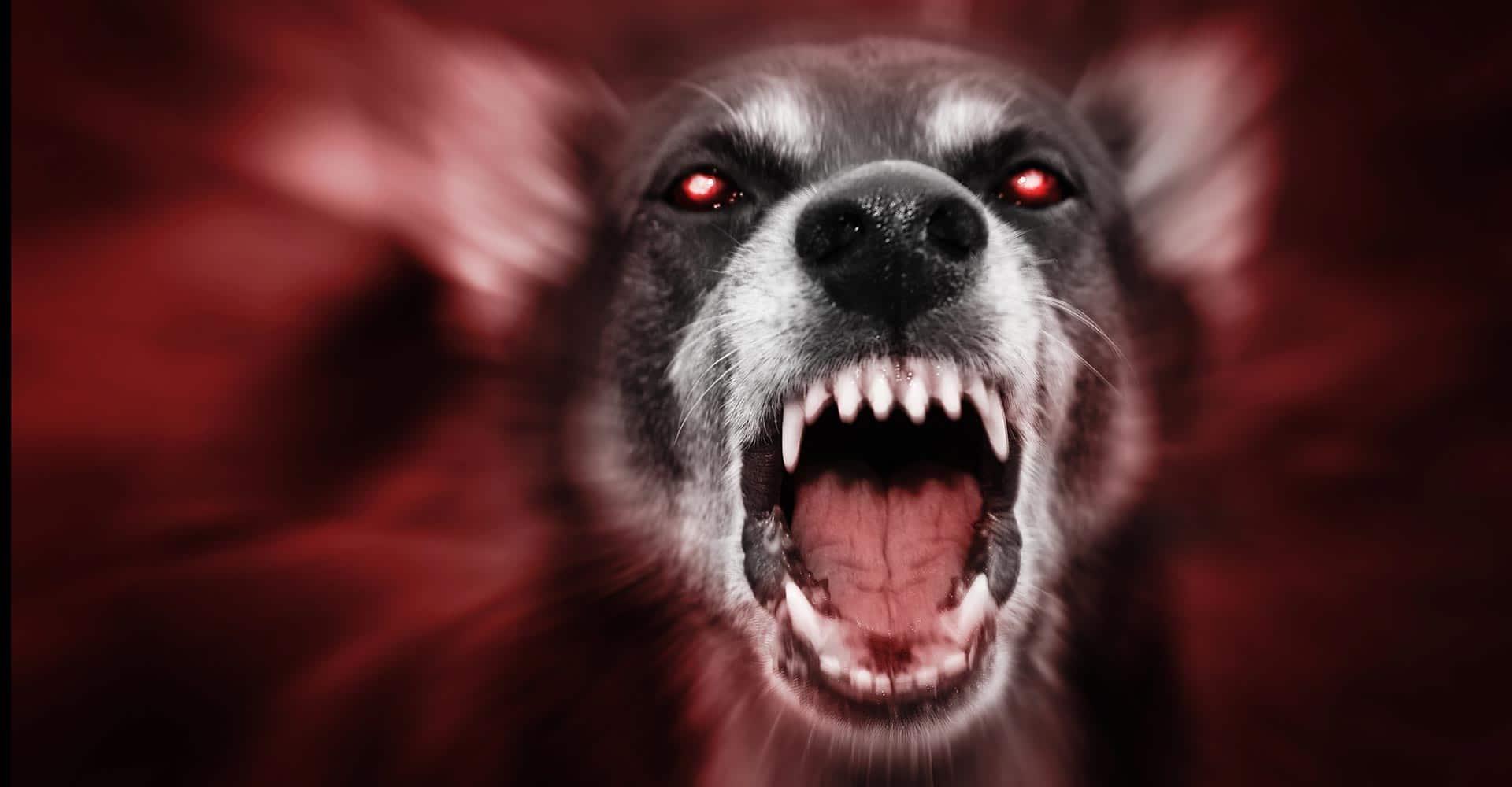 aggressive dog ready to attack